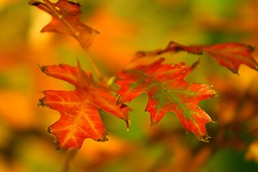 Vivid Autumn by HeatherEllis