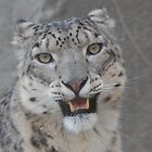 Snow leopard by Steven Squizzero