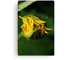 Like snap-beans (from wild flowers collection) Canvas Print
