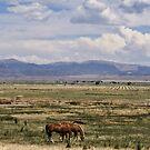 A Horses Life... by NancyC