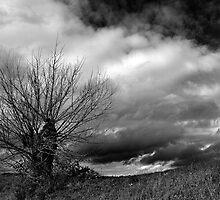 Tuscany Landscape by Marco Vegni