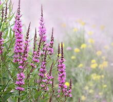 PURPLE LOOSESTRIFE by Lori Deiter