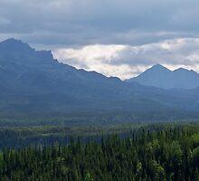 Denali National Park by Dandelion Dilluvio