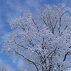 first snowfall by cherylsnake