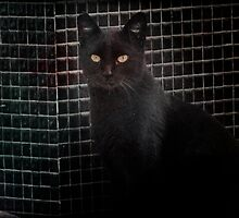 Black Cat by Igor Giamoniano