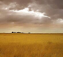 Field of Dreams by RobertCharles