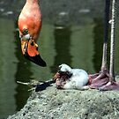 Mother Tending To Newborn Flamingo by Len Bomba