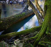 Lazy log  by Michael Howard