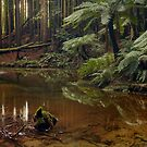 Californian (Giant) Redwoods on the Aire River by Margaret Metcalfe
