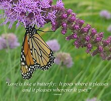 Pic Quote of the Day (Butterfly) by Prismcrow