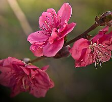 Pink Blossom by GayeL Art