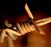 Barbed Wire by KRicho