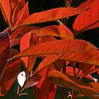 Red Leaves by baldy4eva