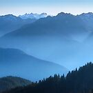 Hurricane Ridge at sundown. Olympic National Park. Washington State. USA. by photosecosse /barbara jones