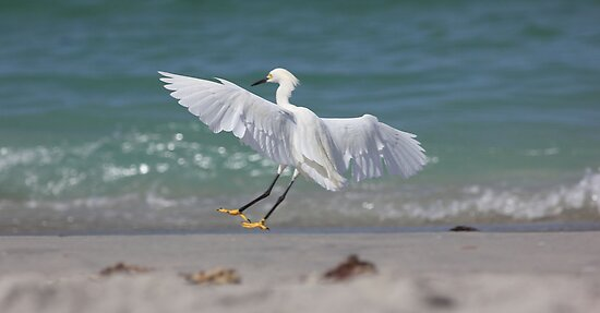 smooth landing  by kathy s gillentine