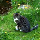 Cat and Pond by ienemien