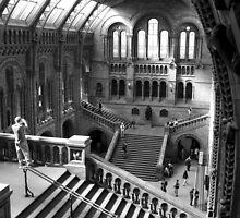 Inside the Natural History Museum, London by cornishgirlie