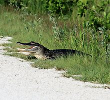 Gator Fun In the Sun by Blaze66
