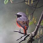 Redstart by Philip Holley