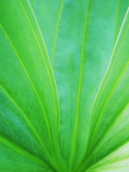 green heart by yvesrossetti