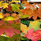 Autum Leaves by Linda Miller Gesualdo