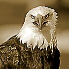 Eagle Eyes  by Judy Grant
