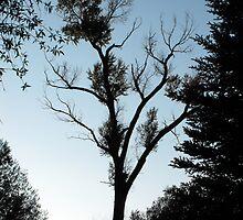Lone Tree by Jan  Tribe