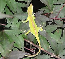 Anole Lizzards - Welcome at My House - Private Gourley Garden (Anole Habitat) in the Smoky Mountains by JeffeeArt4u