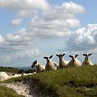 Inquisitive Sheep by mikebov