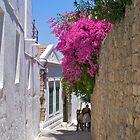 Fuscia flowers in Rhodes by Littlest