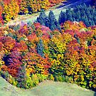 Color Forest by Daidalos