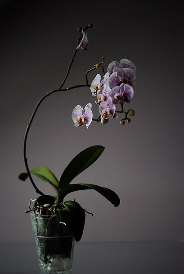 next bloom by narabia