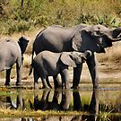 Like mother like daughter - Okavango Delta by Sharon Bishop