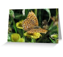 Male Silver washed Fritillary Greeting Card