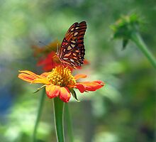 Butterfly Garden by DottieDees