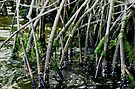 Mangrove roots by Larry  Grayam