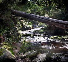 The Weir, Halls Falls, Tasmania by Sue Wilson (Kane)