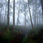 Mist by Robert Sturman