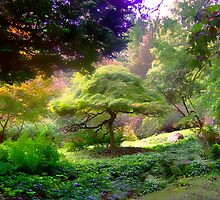 Bonsai Dreams for my Day by Judi Taylor