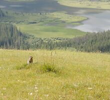 Columbian Ground Squirrel by Rick Champlin