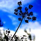 blue sky by kindkurse