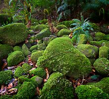 Moss Rocks by Michael Howard