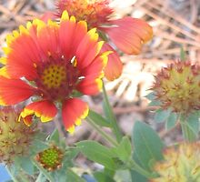Blanket flower fantasia by ♥⊱ B. Randi Bailey