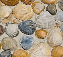 Shells by kelseycowin