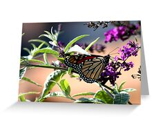 Summer Time Beauty Greeting Card