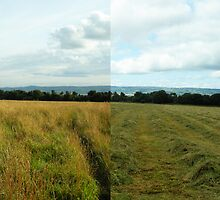 What a difference a day makes by Harri