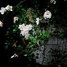Tumbling Rose. by Karen  Betts