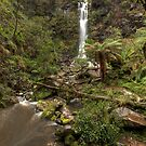 Erskine Falls • Victoria by William Bullimore