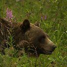 British Columbia Wildlife by Jeff Ashworth & Pat DeLeenheer