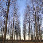 Trees near Preston by John Bromley